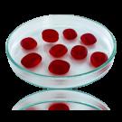 Glaskralen ovaal plat 14mm rood transparant