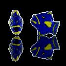 Keramiek kraal vis 12mm blauw geel